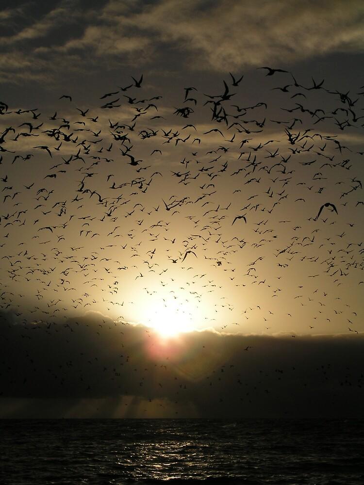 Avian Dawn by neoniphon