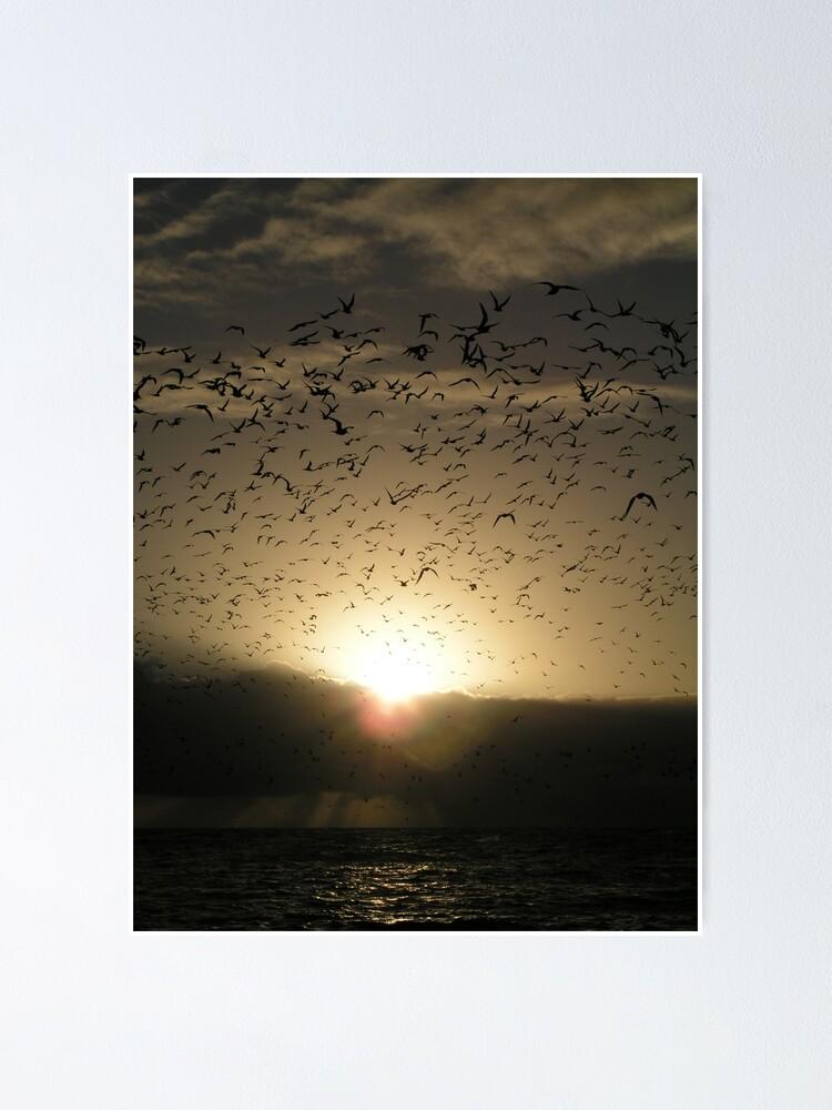 Alternate view of Avian Dawn Poster