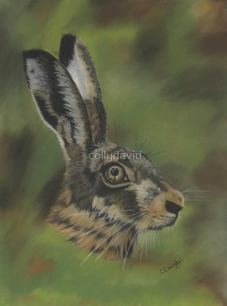 Wild Hare Drawing by collydavid