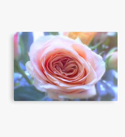 Soft Romantic Rose Metal Print