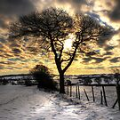 Cold by Chris Charlesworth
