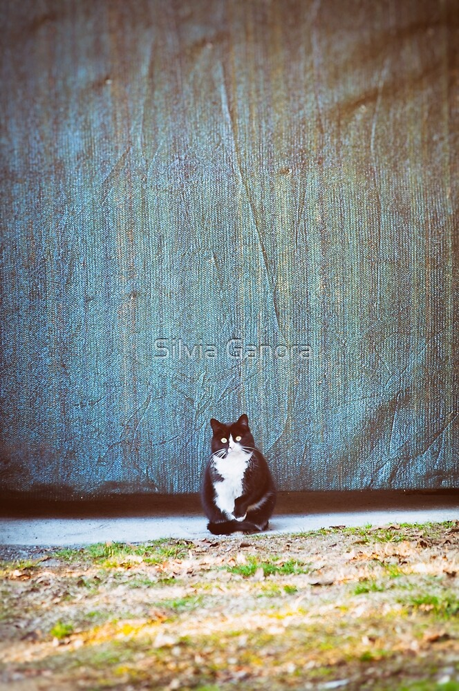 Bicolor kitty by Silvia Ganora