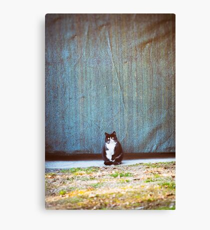 Bicolor kitty Canvas Print
