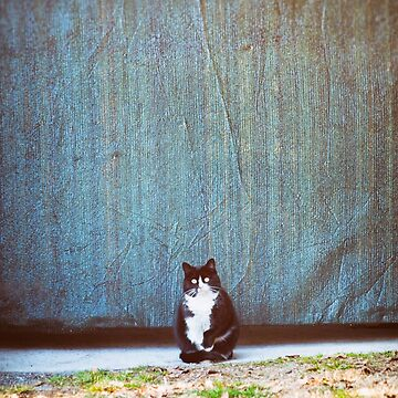 Bicolor kitty by sil63