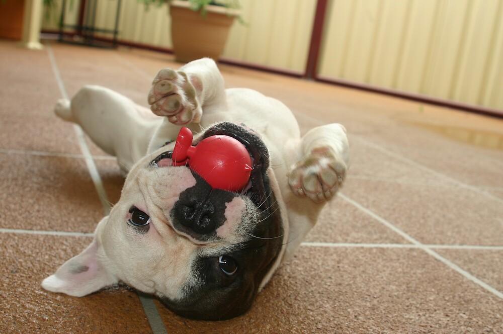 Cuz ball by disorder