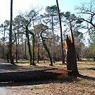 Forbidden path after Klaus storm by 29Breizh33