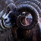Horny Ram by Mark Salmon