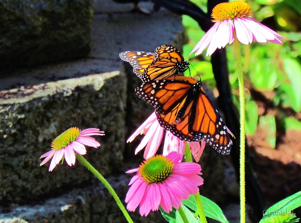 Butterflies And Pink Cornflowers by Cynthia48