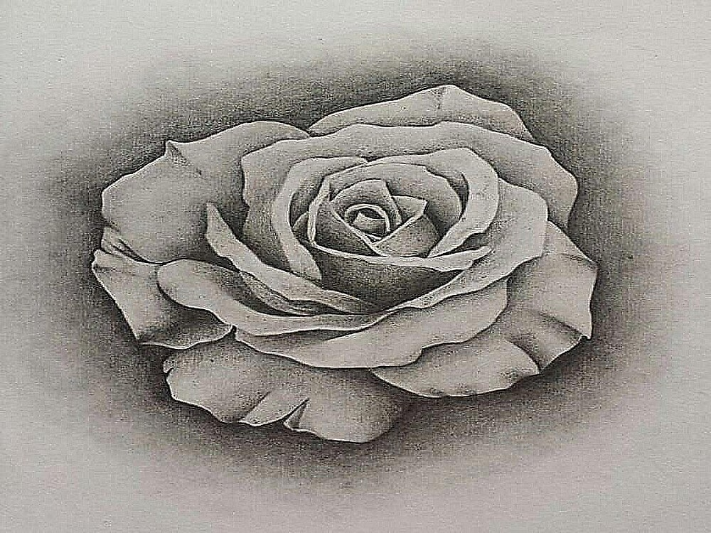 rose to pencil by gustavogol13