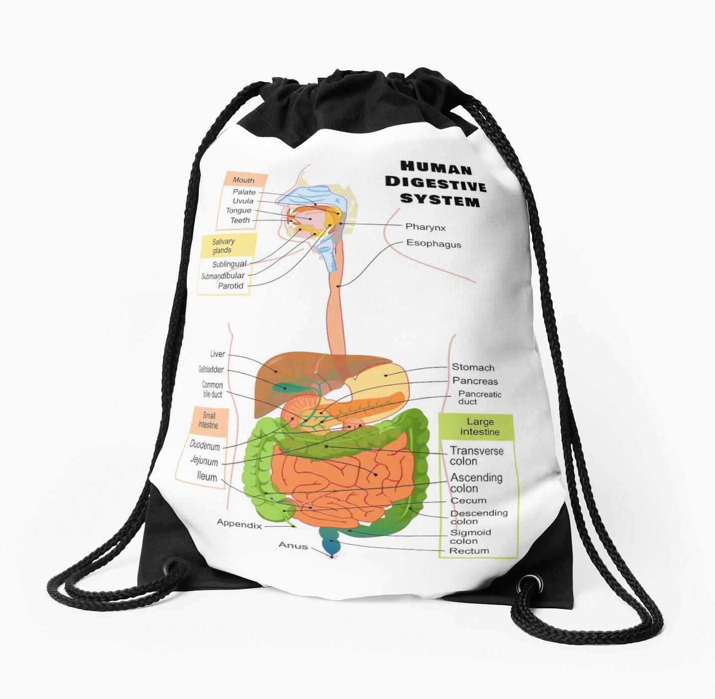 Mochilas de cuerdas «Diagrama del sistema digestivo humano» de ...
