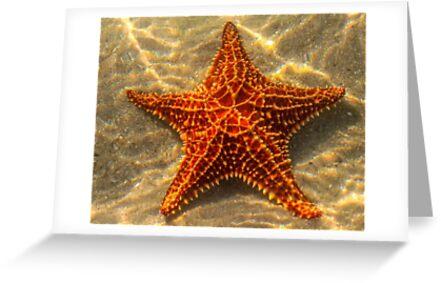 Starfish by ETBtravelphotog