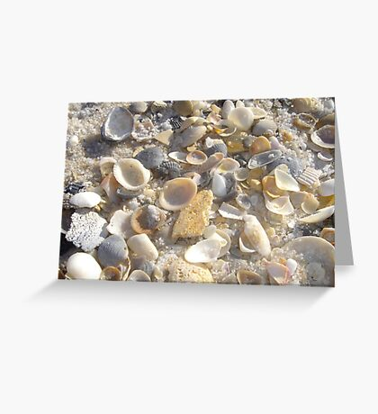 Shells at Tideline Greeting Card