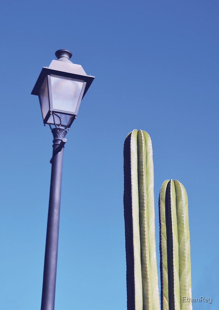 Cactus and Lamp by EthenRey