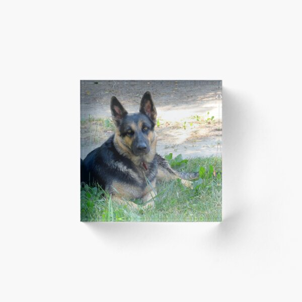 German Shepherd Acrylic Block
