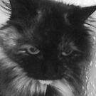 Charcoal Cat by karenuk1969