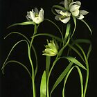 White and Green Fritillaria by Barbara Wyeth
