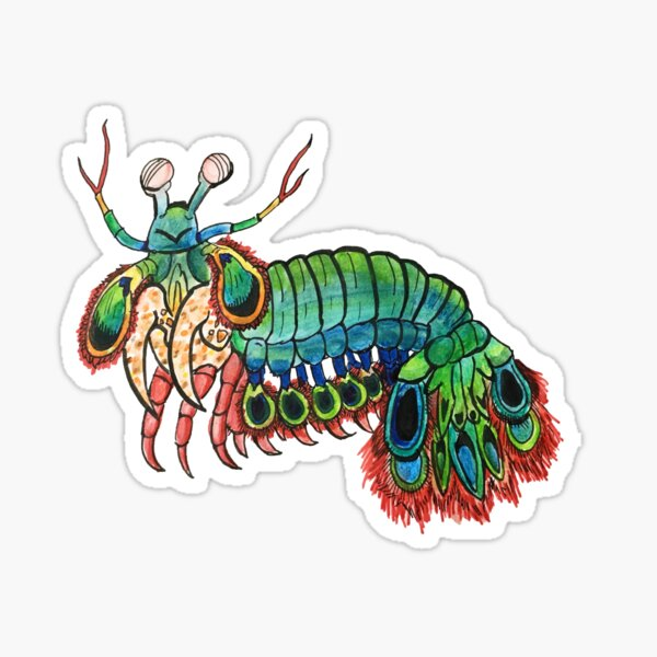 Peacock Mantis Shrimp Watercolor Sticker