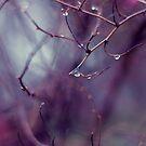 Teardrops of Heaven by -Sunny-