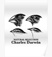 Charles Darwin - Natural Selection Poster