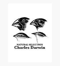 Charles Darwin - Natural Selection Photographic Print