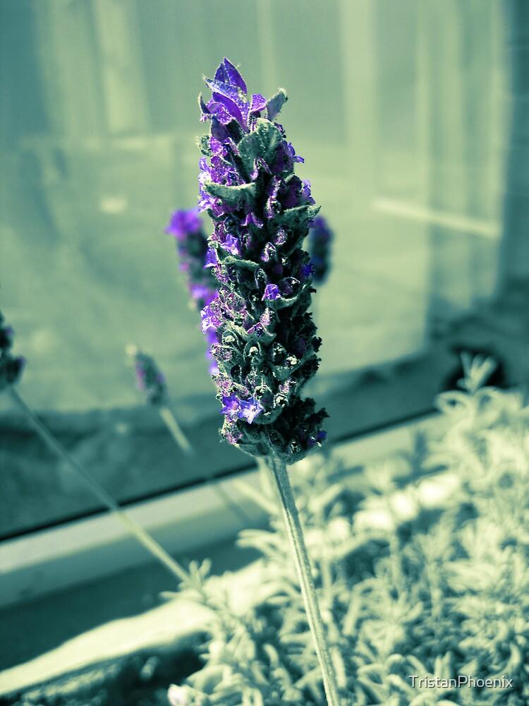 Lady Lavender by TristanPhoenix