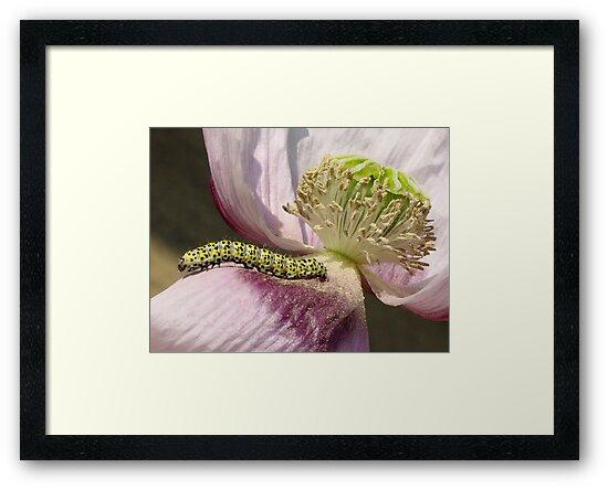 caterpillar flower by Etienne RUGGERI Artwork