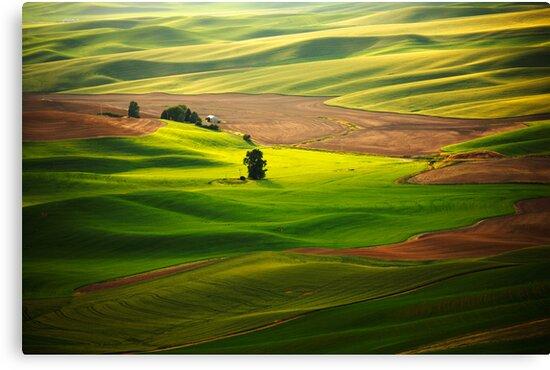 Silky Green by Olga Zvereva