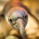 Baby Penguin by Chris Porteous