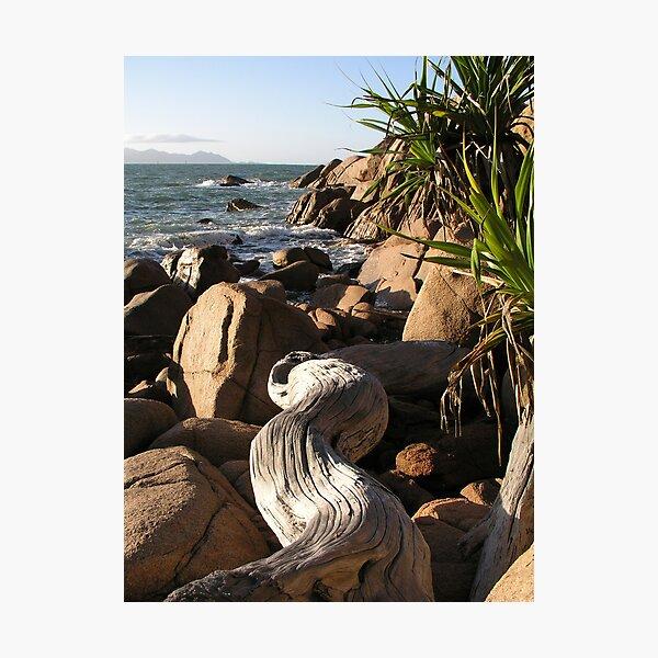 Fish Cove Driftwood Photographic Print