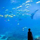 New England Aquarium by Chris Porteous