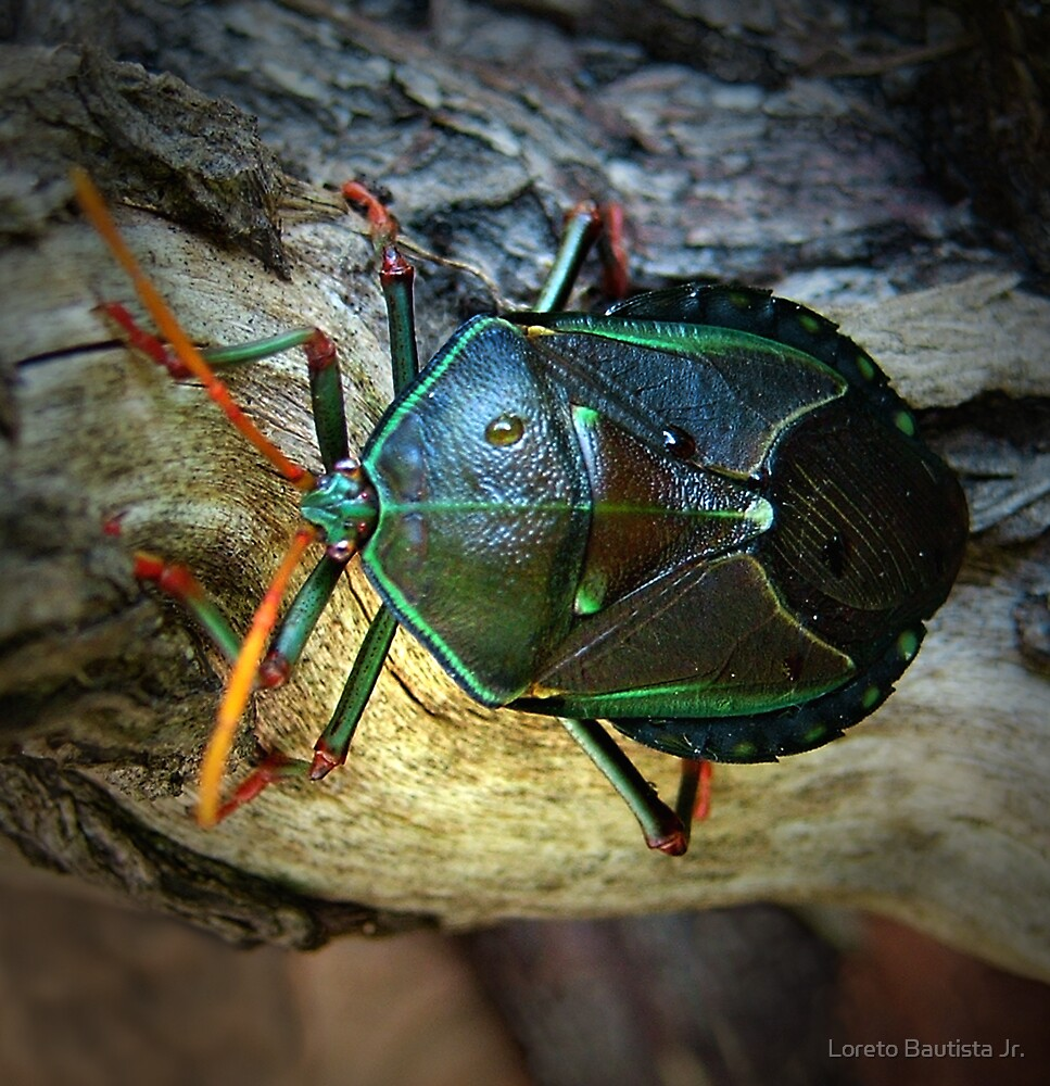 stink bug by Loreto Bautista Jr.