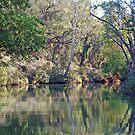 Ord River, Kununurra, Western Australia by Adrian Paul