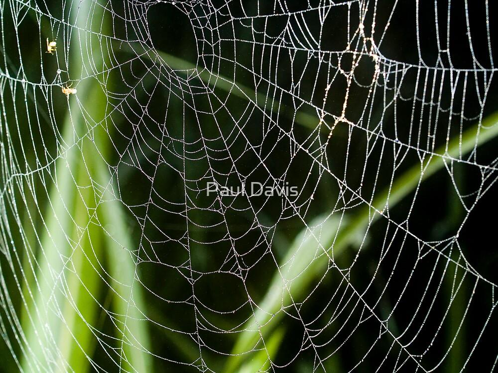 Web of Intrigue by Paul Davis