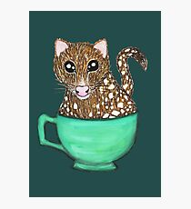 Quoll A Tea - Teal Photographic Print