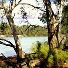 On the banks of the mighty Murray River  by cjcphotography