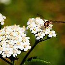Wasp by MadameCat-Art