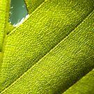 Leaf by MadameCat-Art