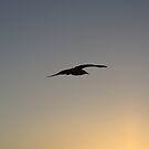 Flying Towards A Rising Sun by Sprinkla