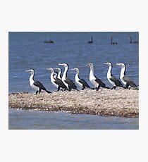 Cormorants Photographic Print