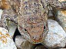 Alligator Lizard by FrankieCat