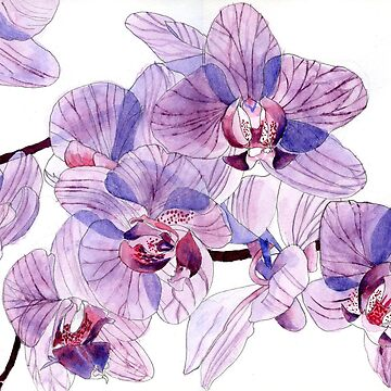 Pink and Lilac Orchids by esvb