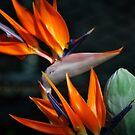 Paradise Colors by Jennifer Vickers