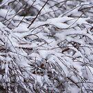 Wintry Fronds by Kasia-D