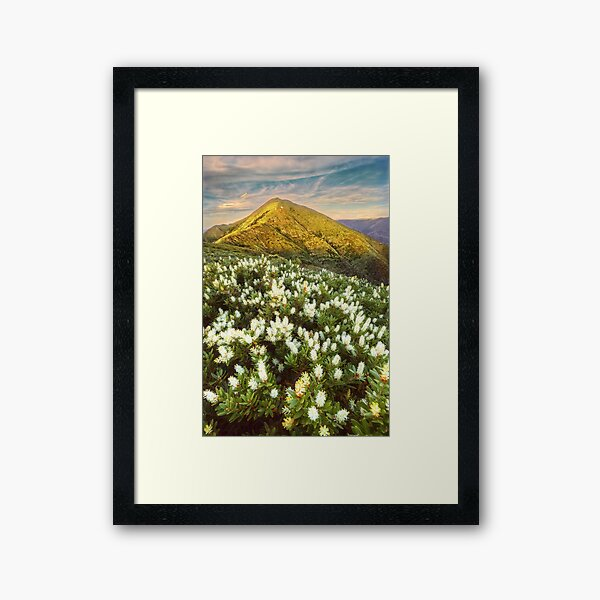 Last light on Feathertop Framed Art Print