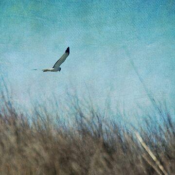 Kite Flying by LynnStarner