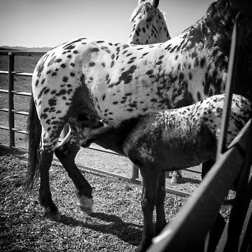 SPOTS by LynnStarner