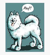 Happy Playing Samoyed Dog Photographic Print