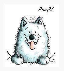 Playing Samoyed Dog Photographic Print