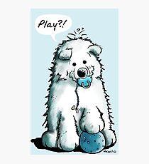 Happy Playing Samoyed Puppy Photographic Print
