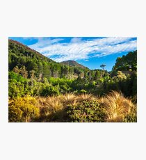 Forest and mountain range at Wilson Bay, NZ Photographic Print